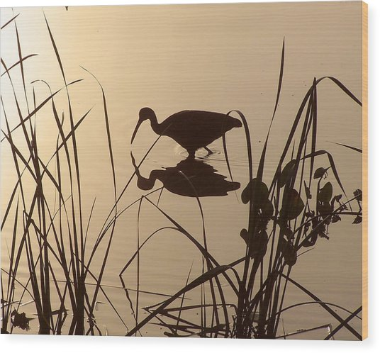 Limpkin At Dawn Wood Print