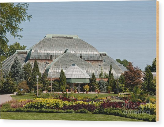 Lincoln Park Zoo In Chicago Wood Print