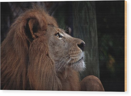 Lion Profile Wood Print