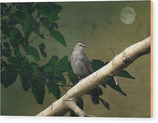 Little Bird Wood Print by Tom York Images