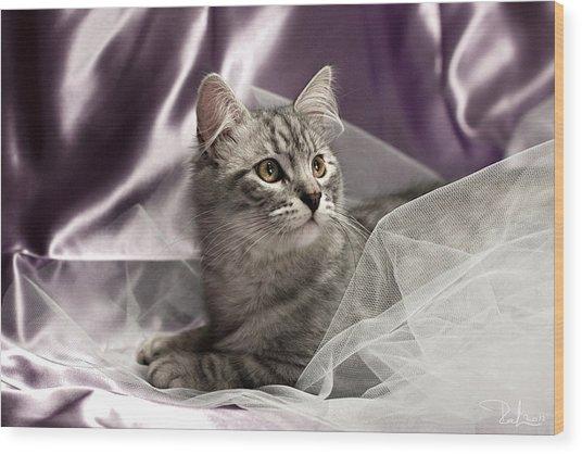 Little Cat On Lilac Wood Print by Raffaella Lunelli