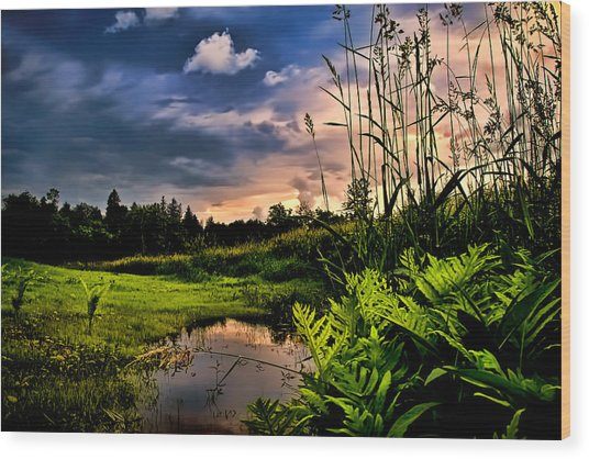 Little Cove Wood Print by Gary Smith