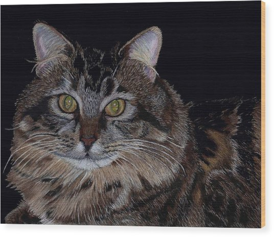 Little Girl - Maine Coon Cat Painting Wood Print
