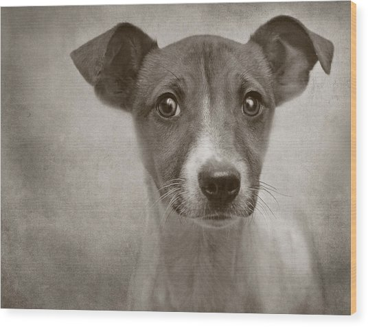 Little Jack Monochrome Wood Print