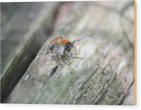 Little Jumper Wood Print