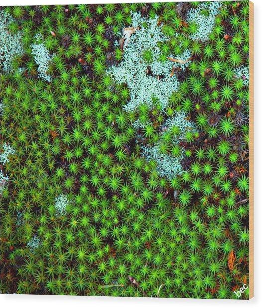 Little Stars Beneath My Feet Wood Print by Bruce Carpenter