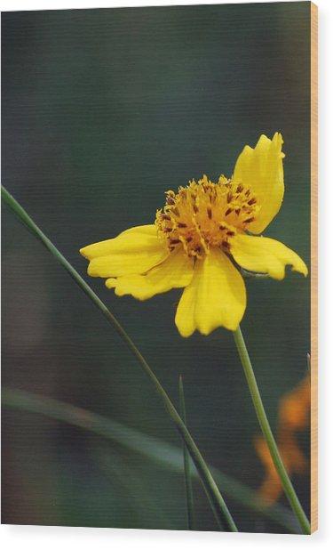 Little Yellow Wood Print