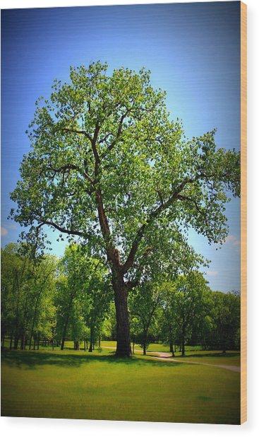 Old Green Tree Wood Print