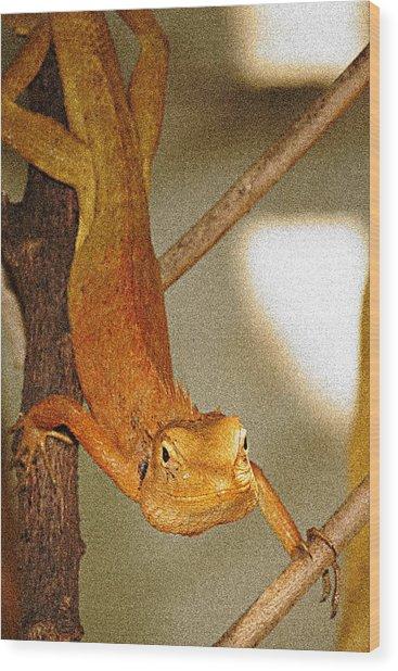 Lizard Wood Print