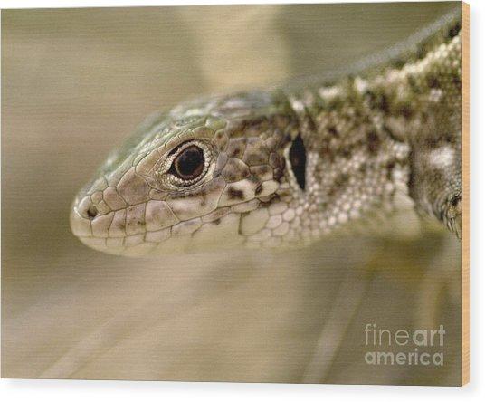 Lizard Portrait Wood Print by Odon Czintos