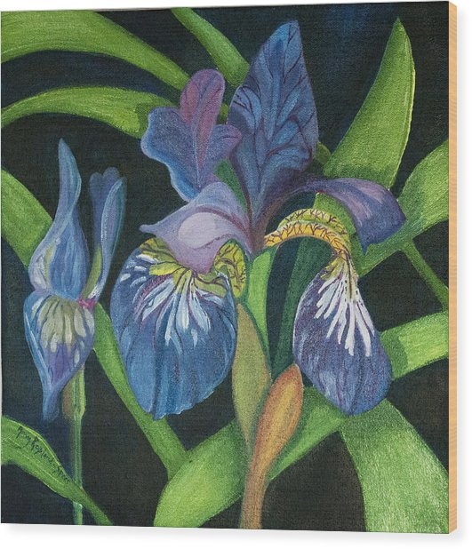 Lois' Iris Wood Print by Amy Reisland-Speer