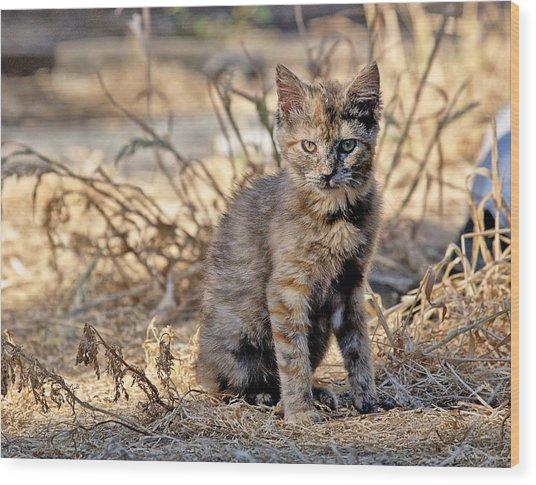 Lone Feral Kitten Wood Print
