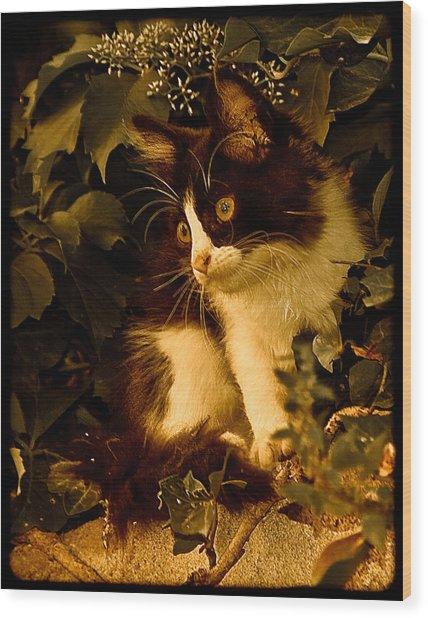 Athens, Greece - Lone Kitten Wood Print