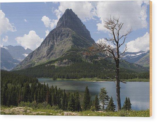 Lone Tree At Sinopah Mountain Wood Print