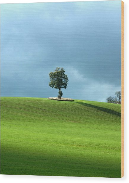 Lone Tree Sintinel Wood Print by Duncan Nelson