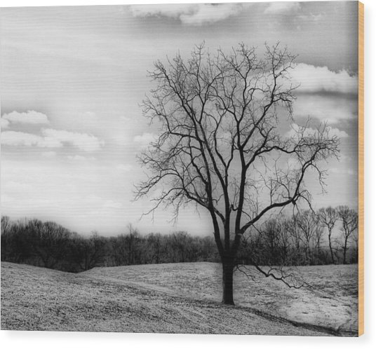 Loneliness Wood Print by Trudy Wilkerson