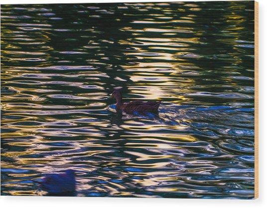 Lonely Swim Wood Print by Joshua Dwyer