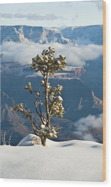 Lonely Tree Over The Grand Canyon Wood Print