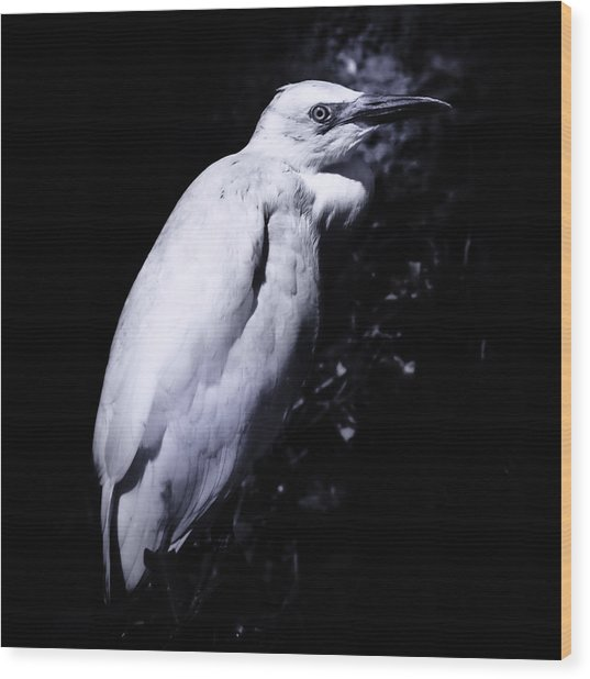 Lonesome Egret Wood Print