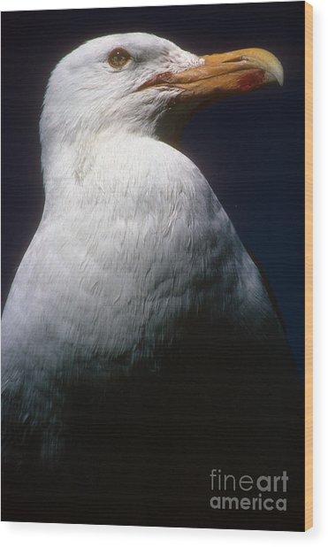 Long Island Seagull Wood Print