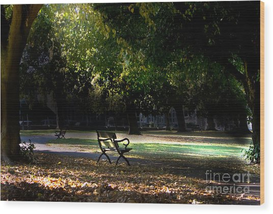 Lonley Park Bench Wood Print