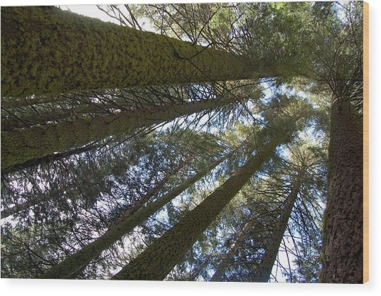 Wood Print featuring the digital art Look Up And Dream by Visual Artist Frank Bonilla