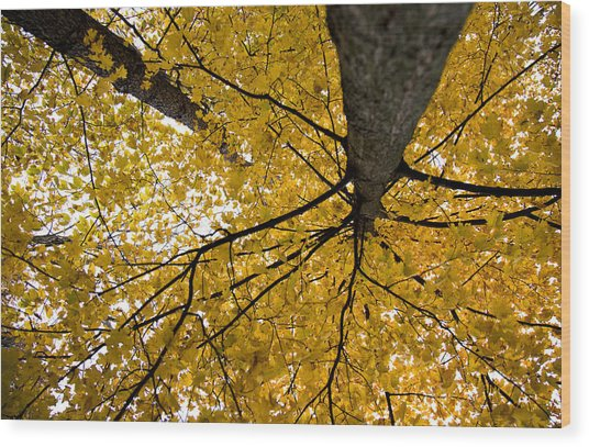 Look Up It Is Fall Wood Print