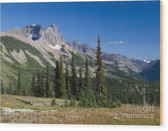 Wood Print featuring the photograph Looking Back by Katie LaSalle-Lowery