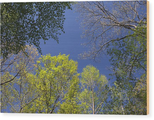 Wood Print featuring the photograph Looking Up In Spring by Daniel Reed
