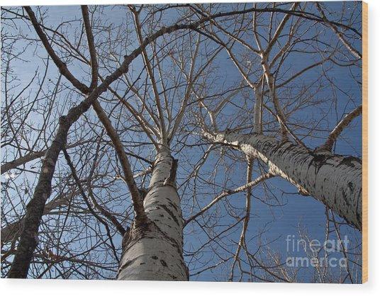 Looking Up Wood Print by Rachel Duchesne