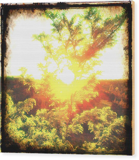 Los Alamos Sunset Wood Print