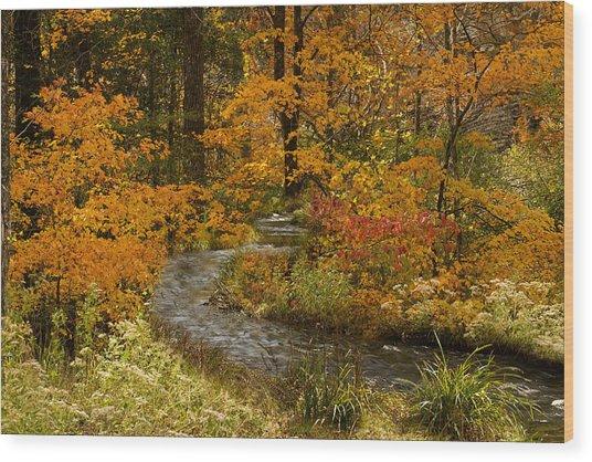 Lost Creek At Beavers Bend Wood Print