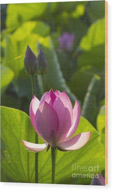 Lotus 4 Wood Print