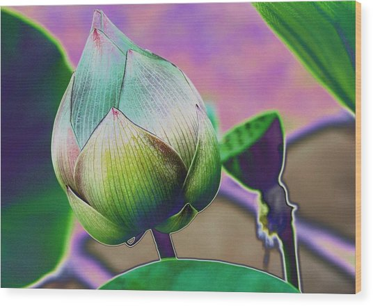 Lotus Dreaming 7 Wood Print