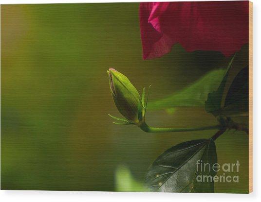 Loves' Bloom Wood Print