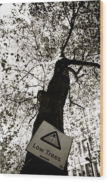 low I think not Wood Print by Jez C Self