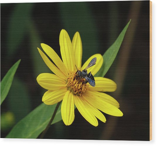 Lunch At Coreopsis Wood Print