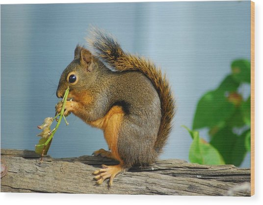 Lunch On A Log Wood Print