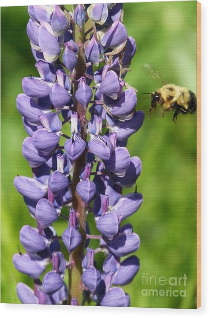 Lupine And Bee Wood Print by Christine Stack