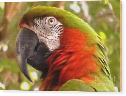 Macaw Alert Wood Print by John From CNY