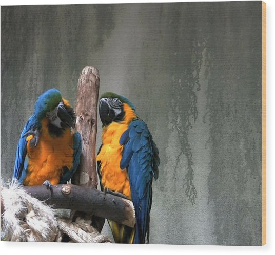 Maccaw Parrots Wood Print by Kim French