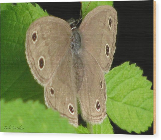 Macro Tan Butterfly Wood Print by Debra     Vatalaro