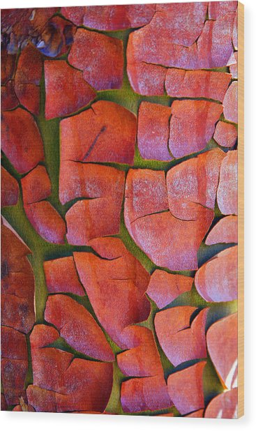 Madrone Wood Print