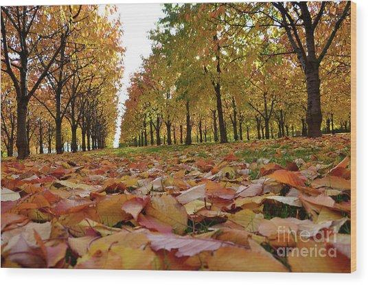 Magic Cherry Trees Wood Print