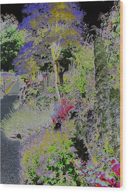 Magic Garden Wood Print by Fred Whalley