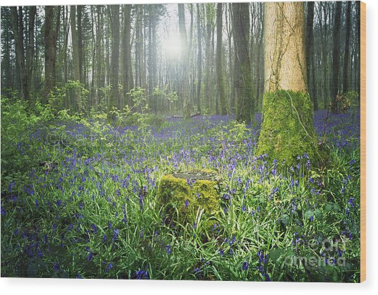 Magical Bluebell Forest In Kildare Ireland Wood Print by Catherine MacBride
