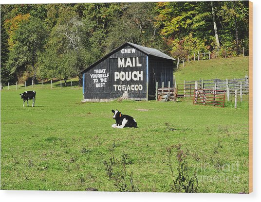 Mail Pouch Barn And Holsteins Wood Print