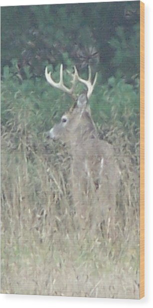 Majestic Buck Wood Print
