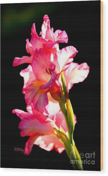 Majestic Gladiolus Wood Print