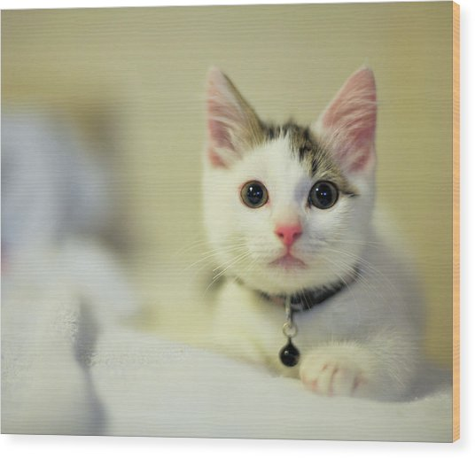 Male Kitten Sitting On Bed Wood Print